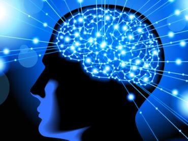 Phospholipids help synaptic transmission