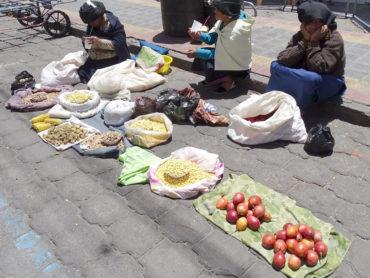 Focus: Latinoamerican food plants